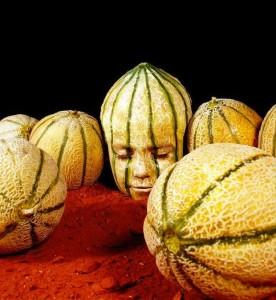 Johannes Stotter fruit